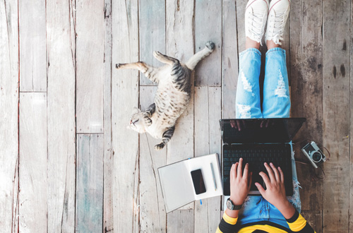 person on a laptop next to a sprawled out kitty